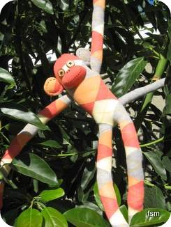 argyle sock monkey pictures